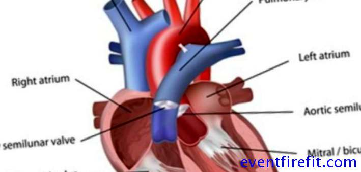 The physiology of the heart